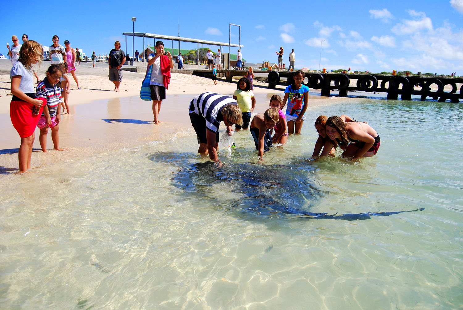 You Can Pilchards From Pelicans Harbour Café And Wade Into The Shallow Water To Get Up Close Personal With Parrie Stingray His Friends