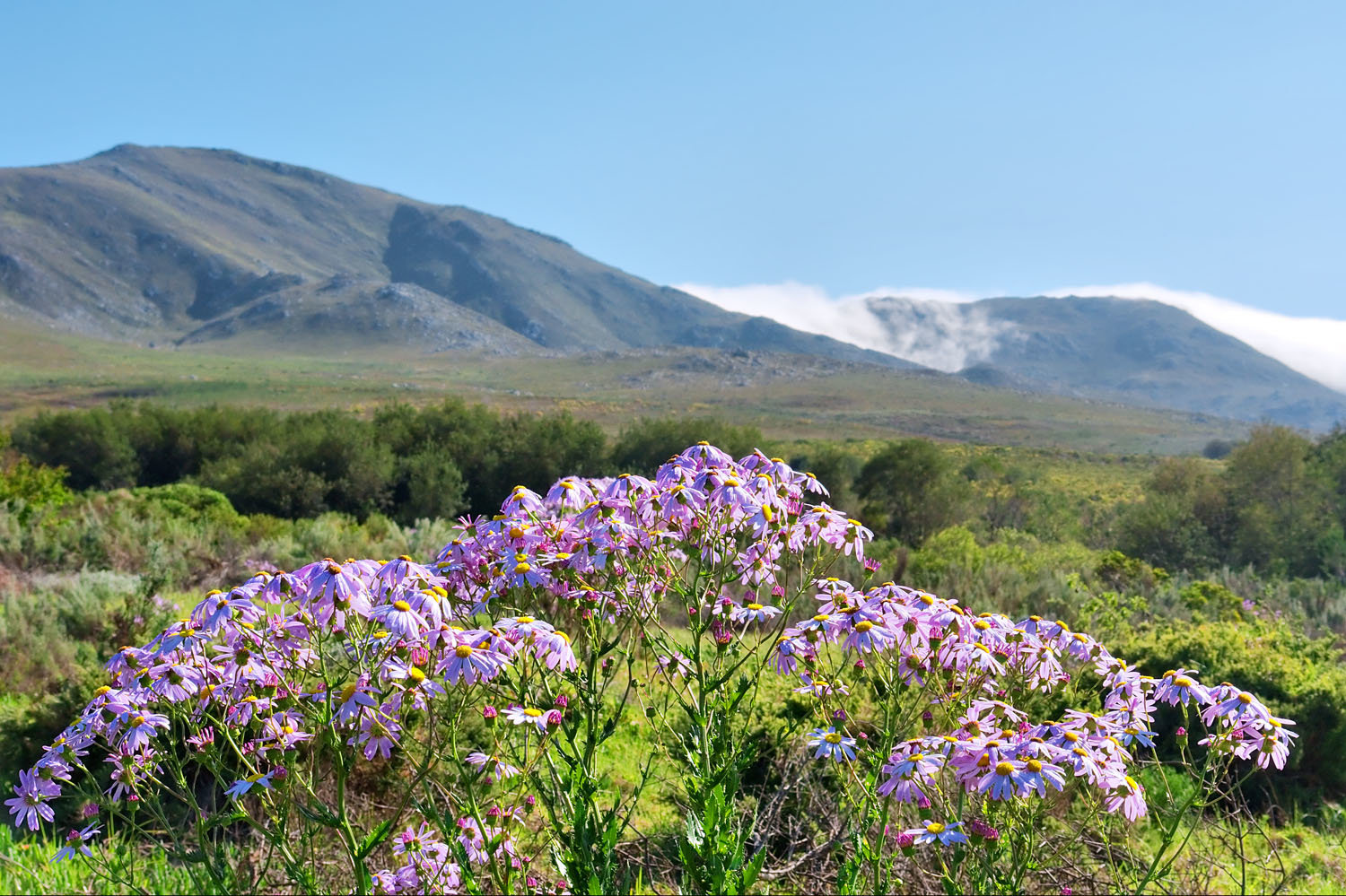Flowers in Fernkloof Nature Reserve