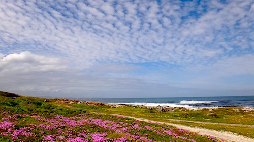 Landscape photo of Fynbos and beach