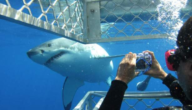 Photo of shark from inside the cage